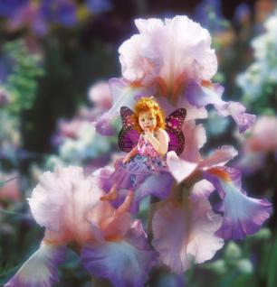 Puzzle 500 Teile - Pink Iris fairy