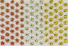 Noch 07135 Grasbüschel blühend