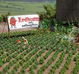 Busch 1265 Erdbeer-Pflanzen