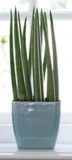 blumentopf blau g nstig sicher kaufen bei yatego. Black Bedroom Furniture Sets. Home Design Ideas