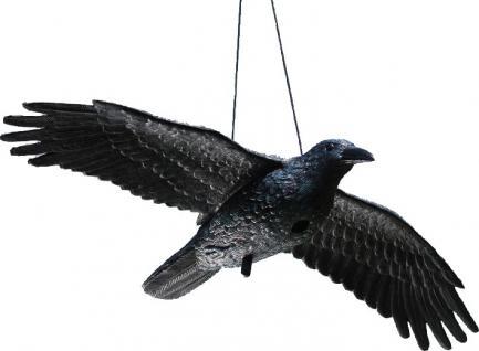 RABE 140517 Fliegend