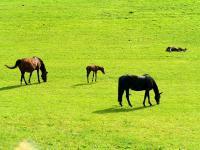 25 KG Grassamen Weide Nachsaat Koppel Saatgut Saat Samen Pferde
