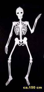 Skelett nachtleuchtend groß