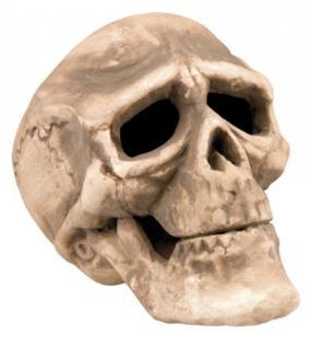 Totenkopf gross ca. 22 x 15 cm Deko Totenkopf Deko Halloween Halloweendeko