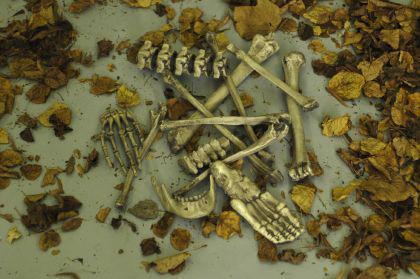 13 Knochen Skelett Halloween Pirat