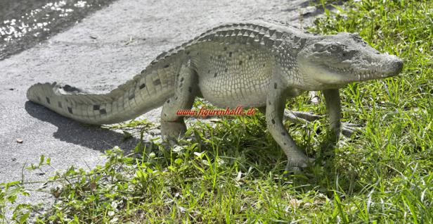 Krokodil Alligator Dekofigur Figur Statue - Vorschau 1