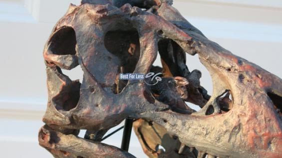 dinosaurier kopf tyrannosaurus skelett ausgrabung deko figur standfigur fan kaufen bei helga. Black Bedroom Furniture Sets. Home Design Ideas