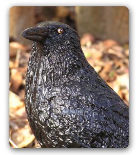 Schwarzer Rabe Vogel Figur Dekofigur - Vorschau 2