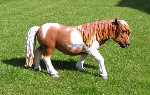 Pferd Dekofigur Pony Figur Reiterhof - Vorschau 5