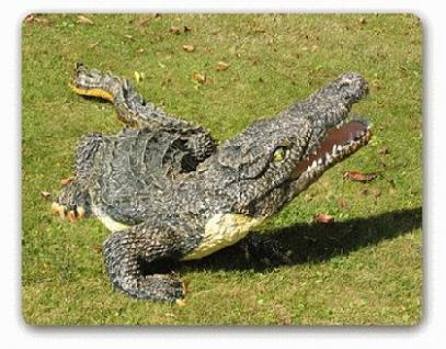 Krokodil Kroko Aligator Figur Dekofigur Garten - Vorschau 2