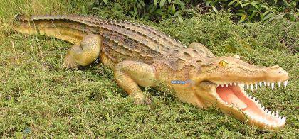 Alligator Krokodil Figur Aufstellfigur Lebensgroß