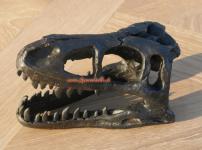 Dinosaurier Kopf Tyrannosaurus Skelett Ausgrabung Deko Figur Standfigur Fan