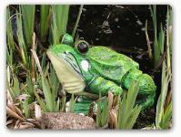 Frosch als Dekofigur für Garten und Gartenteich