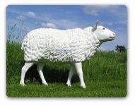 Schaf Schäfchen Dekofigur Statue Figur Lebensgroß