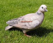 Taube lebensecht Figur