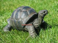 Schildkröte Gartenteich Teich Figur Statue Skulptur lebensecht