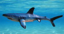 Hai Lebensgroß Dekofigur Figur Statue Haifisch