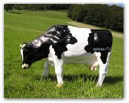 Kuh Dekofigur oder Bauernhof Dekoration Figur