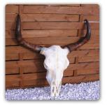 Longhorn Schädel Western Wanddekoration Figur