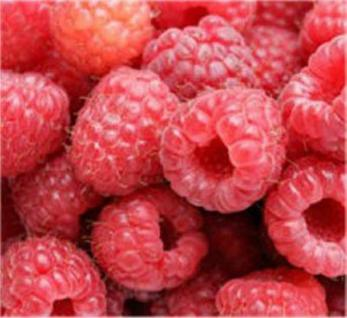 Himbeere Autumn Bliss - Rubus idaeus - Vorschau