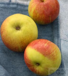 Apfelbaum Geflammter Kardinal 60-80cm - saftig und knackig - Vorschau