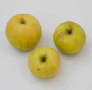 Apfelbaum Batull 60-80cm - robust und saftig - Vorschau
