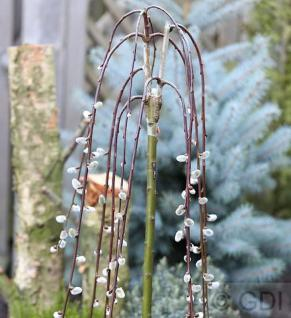 Hochstamm Hängende Kätzchenweide 100-120cm - Salix caprea - Vorschau