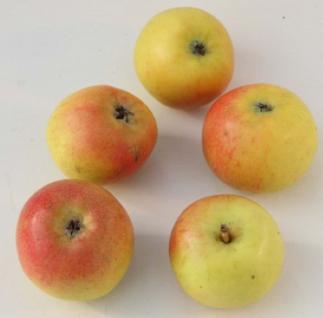 Apfelbaum Martini 60-80cm - feinwürzig und edel - Vorschau