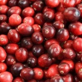 Cranberry Red Star 20-30cm - Vaccinium macrocarpon - Vorschau
