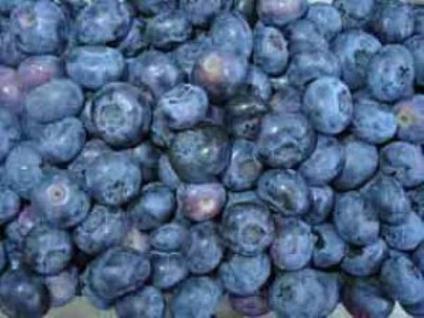 Heidelbeere Blueray 30-40cm - Vaccinium corymbosum - Vorschau