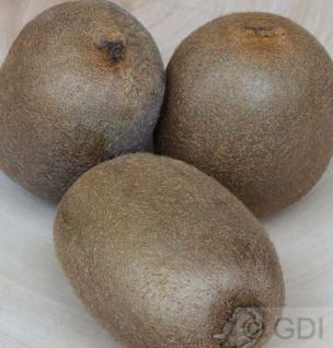 weibliche Kiwi Hayward 80-100cm - Actinidia chinensis - Vorschau
