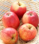Apfelbaum Doppelpison 60-80cm - für Apfelmus oder Apfelsaft - Vorschau