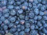 Heidelbeere Blueray 20-30cm - Vaccinium corymbosum - Vorschau