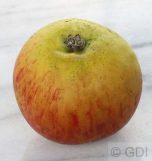 Apfelbaum Lanes Prinz Albert 60-80cm - fest und feinwürzig - Vorschau