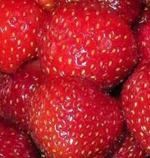 Garten Erdbeere Marieva Macherauch - Fragaria ananassa - Vorschau