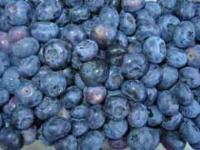 Heidelbeere Blueray 30-40cm - Vaccinium corymbosum