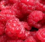 Himbeere Glen Clova® - Rubus idaeus