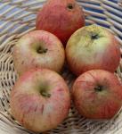 Apfelbaum Pison 60-80cm - fest und sauer