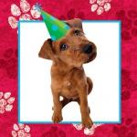 16 kleine Hunde Party Servietten