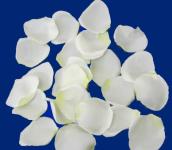 150 Stk.Rosenblüten creme/weiß, Hochzeit, Streudeko, Tischdeko, Just Married