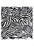 Bandana Zebra