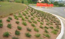Plantex® Premium plus 2 x 50 m Unkrautvlies Gartenvlies von DuPont™
