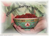 Goji lycium chinensis 50 korn selber ziehen