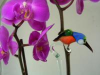 Orchideenstab Eisvogel 1 - Orchid Stick Icebird