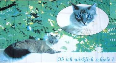Flagge Fahne Katzen 90 x 150 cm - Vorschau