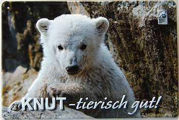 Knut tierisch gut Blechschild - Vorschau