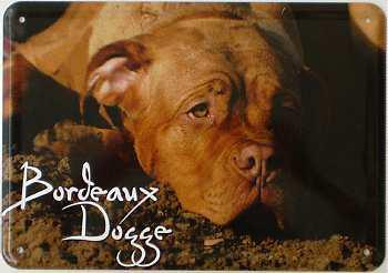 Blechpostkarte Hunde - Bordeaux Dogge