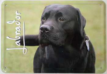 Blechpostkarte Hunde - Labrador - Vorschau