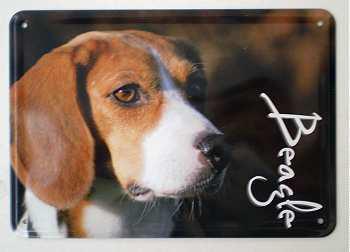 Blechpostkarte Hunde - Beagle