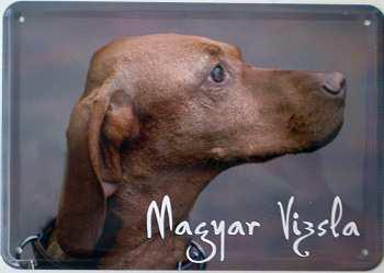 Blechpostkarte Hunde - Magyar Vizsla - Vorschau